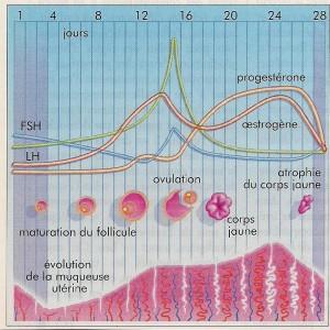cyclefminin