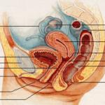Gynécologie médicale