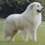 Le chien (cas cliniques)