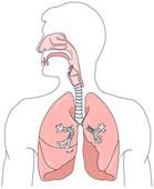 respiratoire