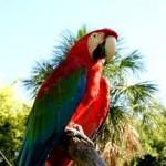 Nouvelles pathogénésies : les oiseaux