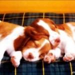 Les vaccins vétérinaires