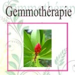 La Gemmothérapie