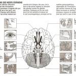 Neurologie (Sémiologie Chap.9)