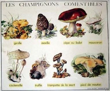 ChampignonsComestibles