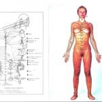 Neuralthérapie : la thérapeutique