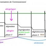 Principaux remèdes selon les phases