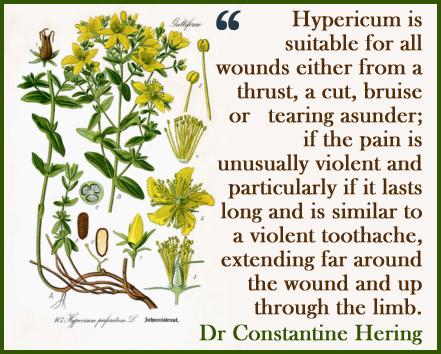 Hypericum2