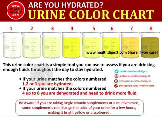 Blood In Dog S Urine Symptomes