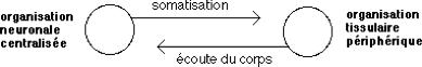 Consulthoméo1