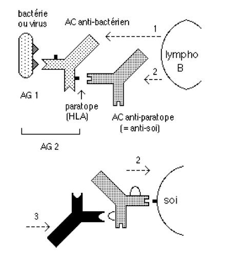 AutoImmuVaccin2