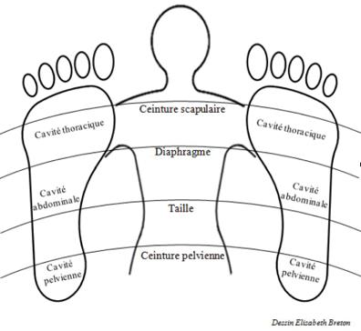 Reflexologie Seminaire 1 Medecine Integree