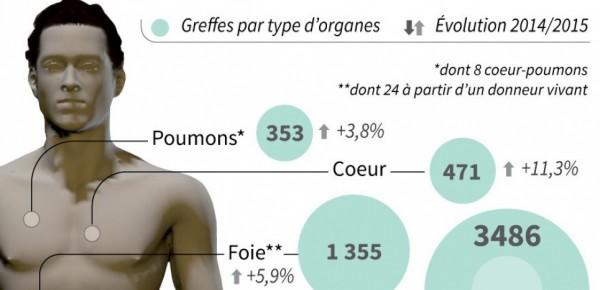 Les greffes d'organes en 2015.