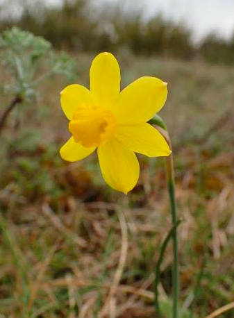 NarcissusPseudoN