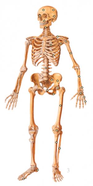 SqueletteEntier