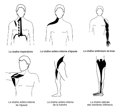 chaines_musculaires1