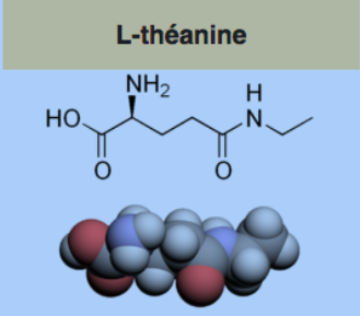 Théanine2