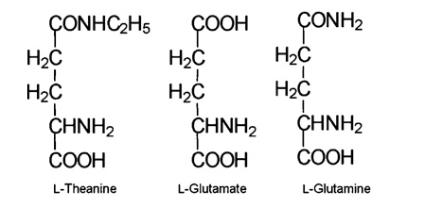 Théanine3