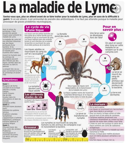 Borréliose et maladie de Lyme | Médecine intégrée