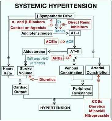 L'hypertension artérielle (HTA) - Médecine intégrée